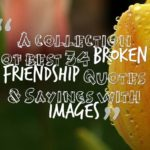 A collection of best 34 Broken friendship Quotes & Sayings with images